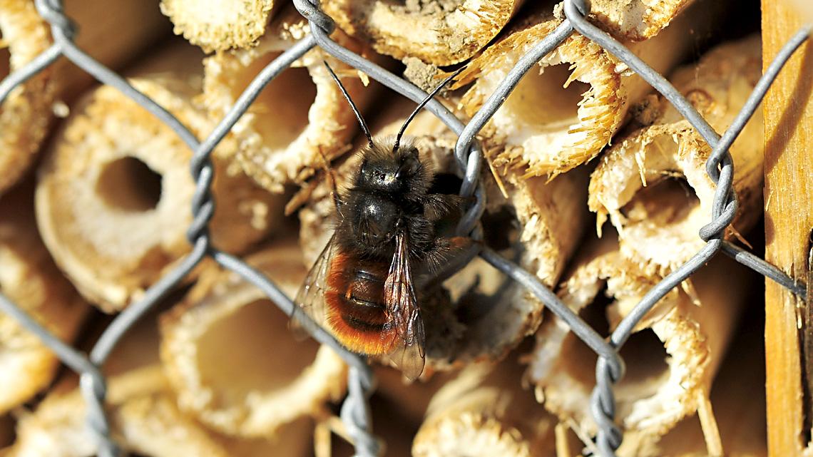 umwelttelefon warum insektenhotels und was mache ich mit einem bienennest naturschutz ruhr. Black Bedroom Furniture Sets. Home Design Ideas