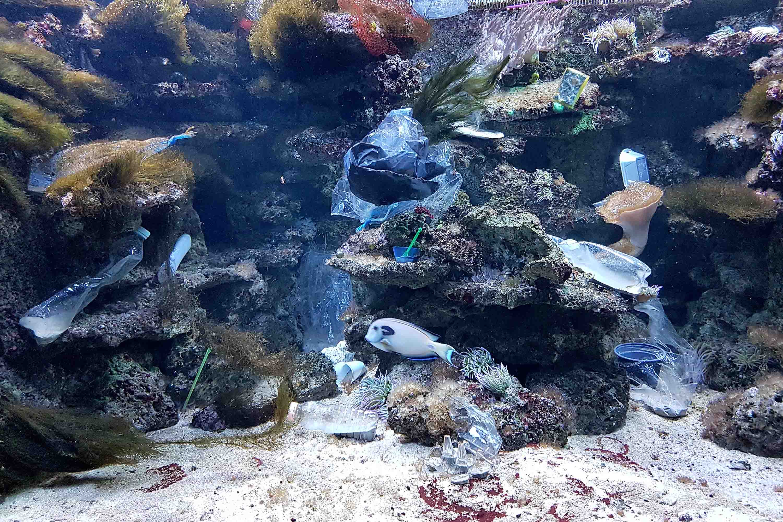 zoo duisburg neues naturnahes gehege im aquarium naturschutz ruhr. Black Bedroom Furniture Sets. Home Design Ideas