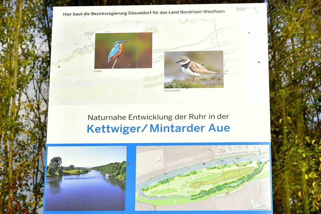 BEZIRKSREGIERUNG: Eine Naturschutz-Insel für die Ruhr