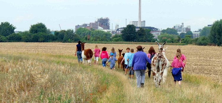 Kinder wandern mit Lamas in den Rheinauen