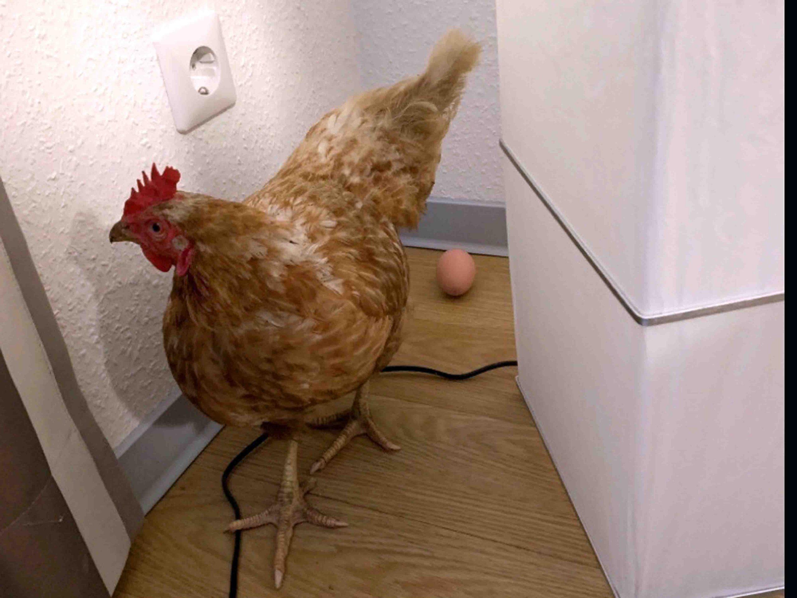 Huhn Ei