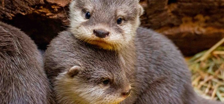 © Marcel Stawinoga / Zoo Dortmund | Esel-Nachwuchs mit Mutter ELLA
